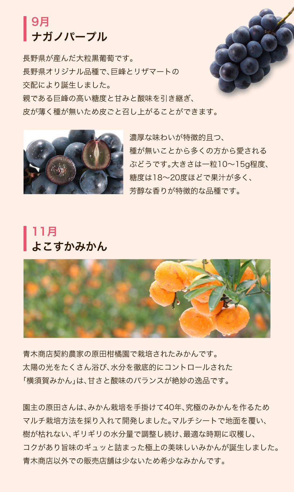 旬のおススメ品種Tコース ナガノパープル よこすかみかん