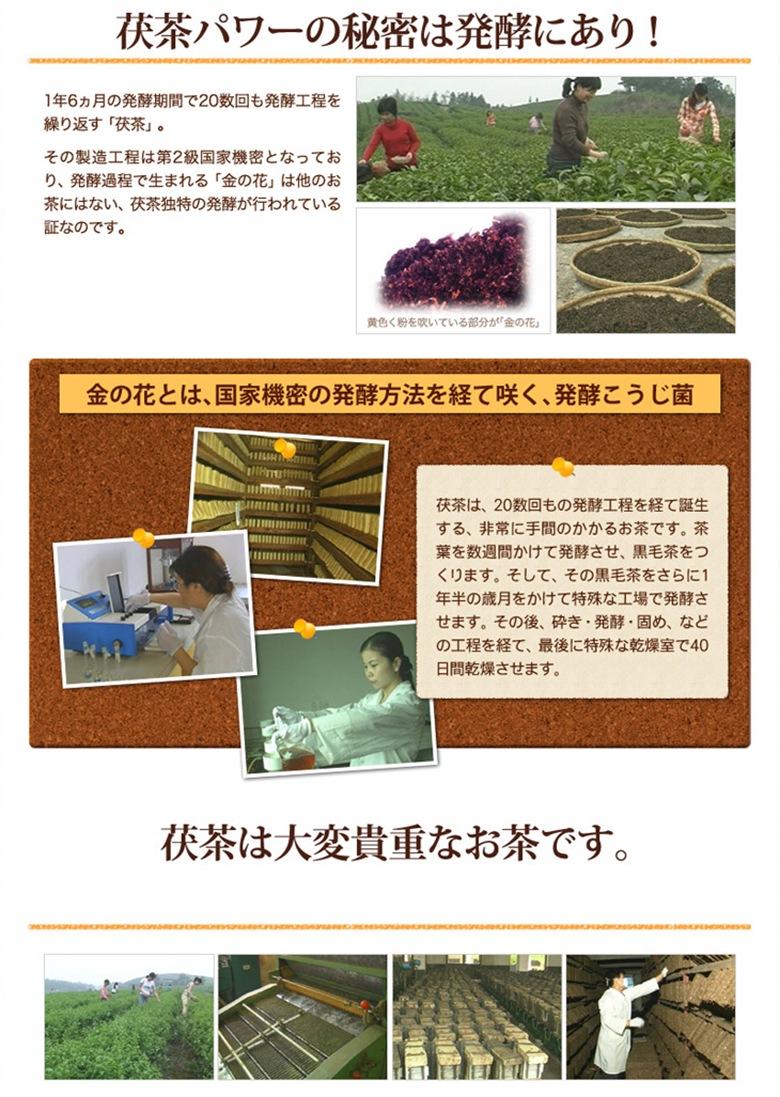 発酵パワー