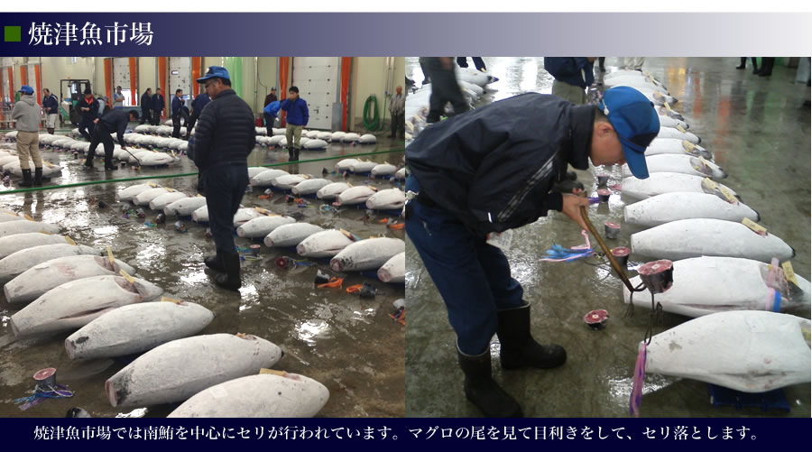 焼津魚市場