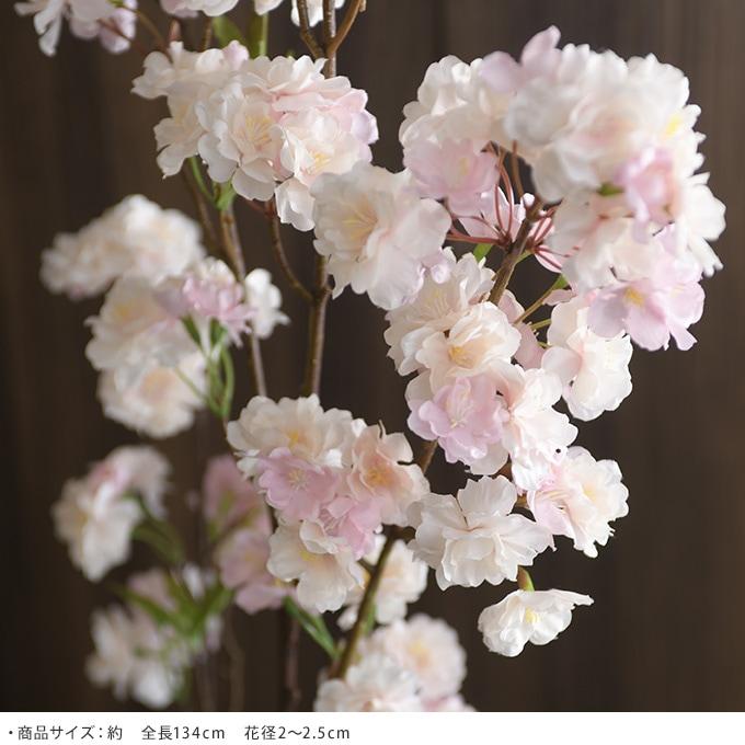 桜ブランチ Ver19