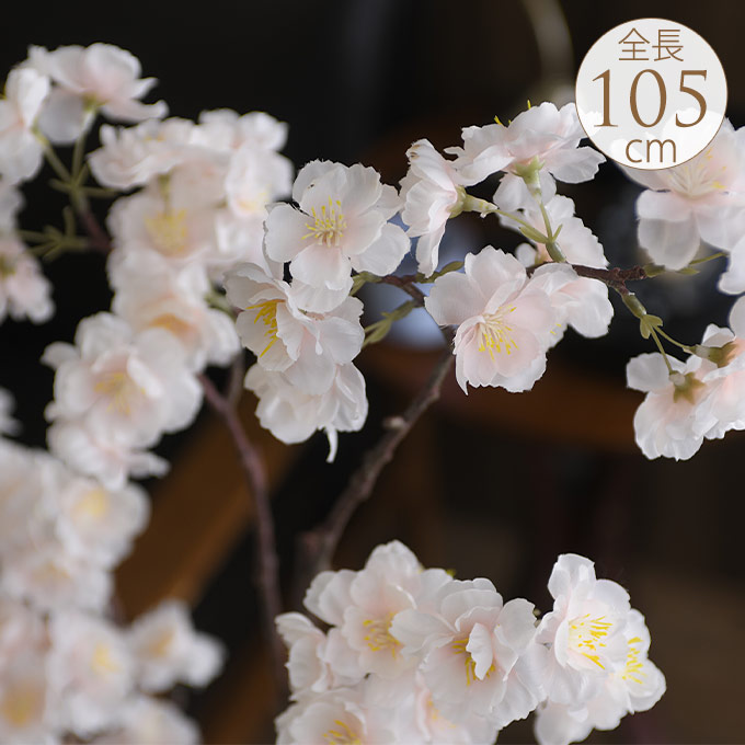 大枝桜 Ver19