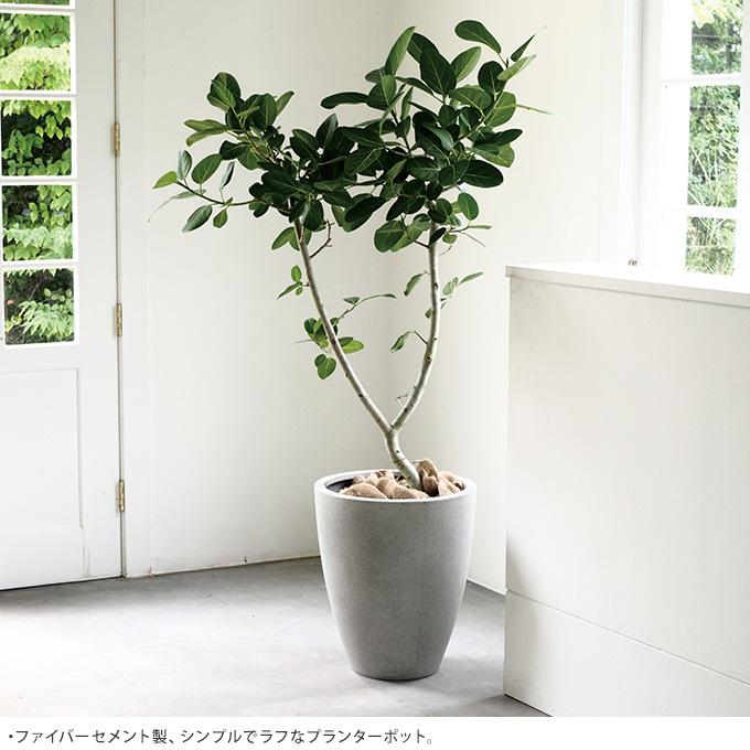 大人びた質感 コンクリート鉢 アッシュラウンド 直径60cm  鉢 大きい プランター 大型 植木鉢 シンプル 花器 大きな エントランス 玄関 マンション バルコニー 寄せ植え ベランダ