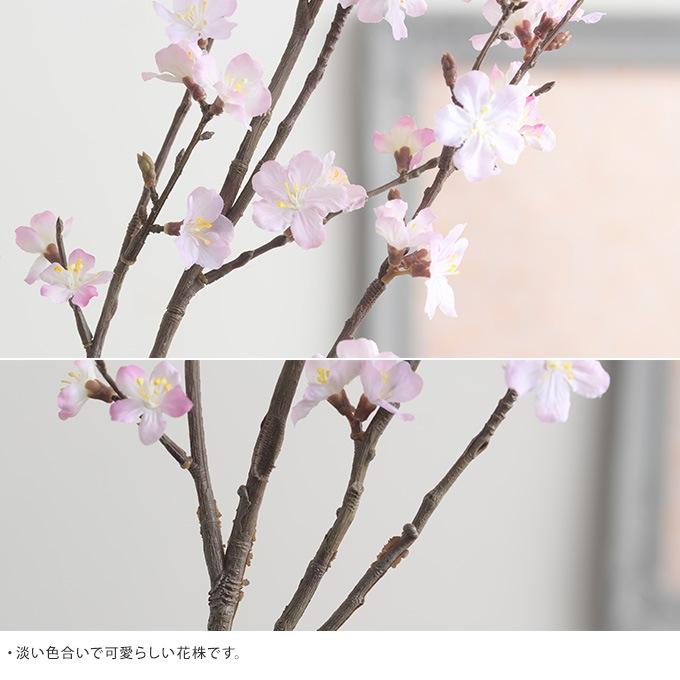 花柳桜ブランチ L