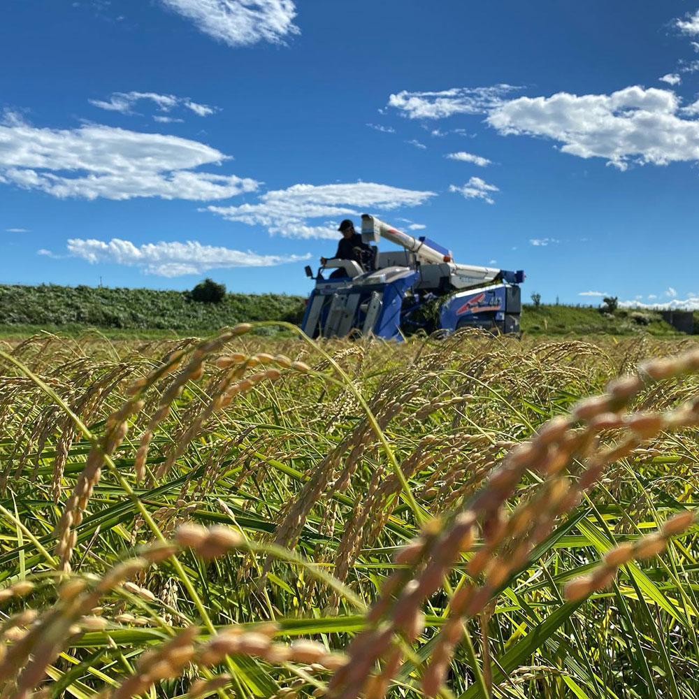 減農薬・減化学肥料コシヒカリ白米10㎏