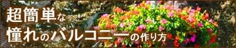 アイビーゼラニウム全12品種