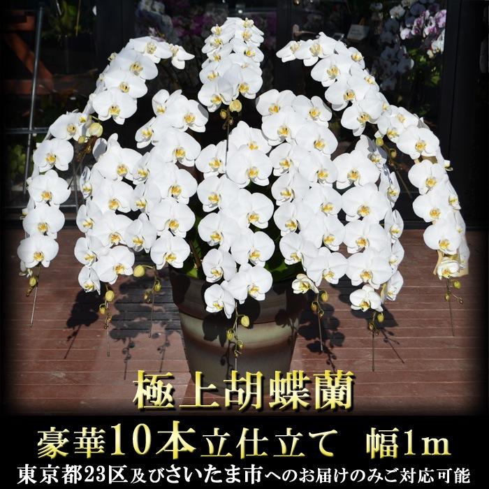 【特注】極上胡蝶蘭 10本立仕立て 「エンペラー」