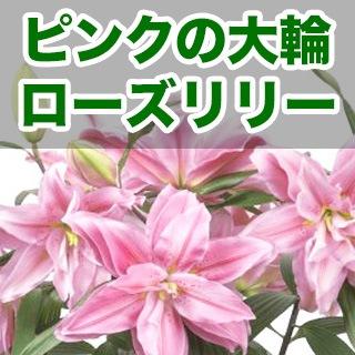 母の日 大輪ゆり八重咲きピンク