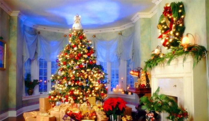 本物のモミの木でクリスマスを!
