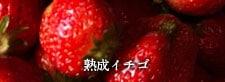 熟成イチゴ