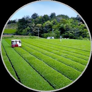 安全な農園