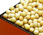 北海道産スズマル大豆