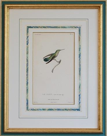 レッソン ハチドリの絵 ハミングバード 鳥の絵