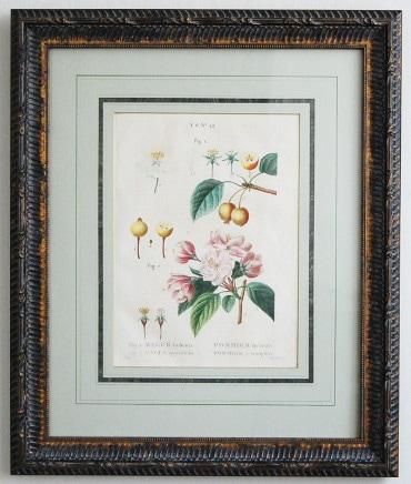 ルドゥーテ フランス樹木誌 リンゴの木 アップルツリー リンゴの花 ボタニカルアート