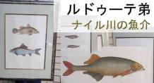 アンリ=ジョゼフ・ルドゥーテ エジプト誌 ナイル川の魚介