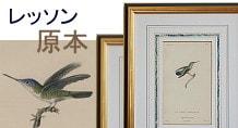 レッソン ハチドリの自然史 原本