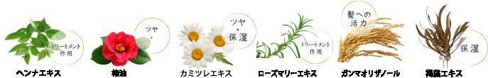 6つの植物エキス