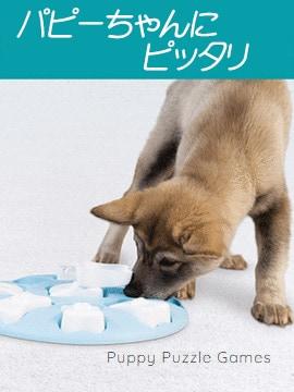 子犬用知育玩具