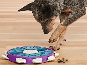 賢い犬、食べ物を欲しがる犬