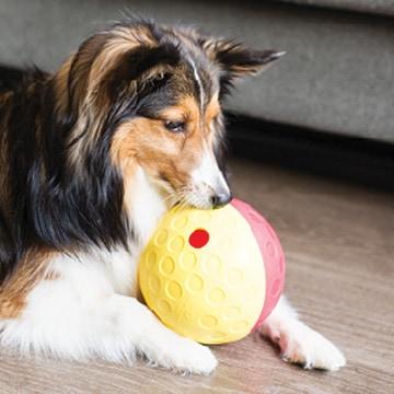 噛み癖のある犬