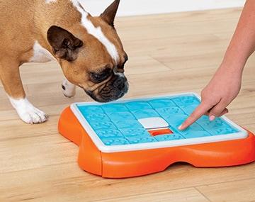 パズルゲームと遊ぶ犬