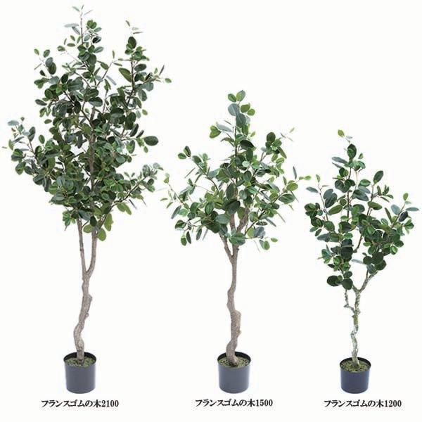 人工観葉植物フランスゴムの木1200 1500 2100