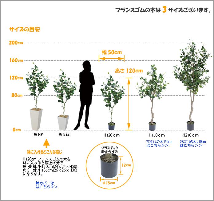 フランスゴムの木1200サイズ