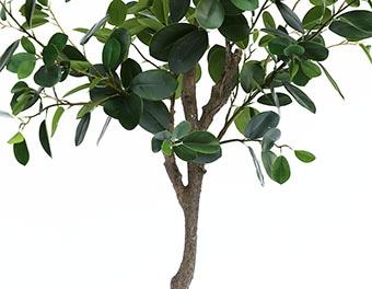 人工観葉植物フランスゴムの木1500の根本