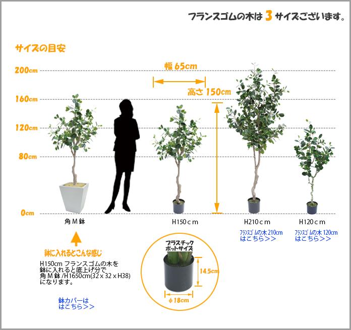 フランスゴムの木1500サイズ