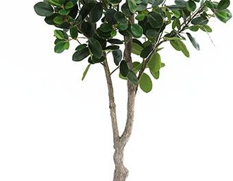 人工観葉植物フランスゴムの木2100の根本