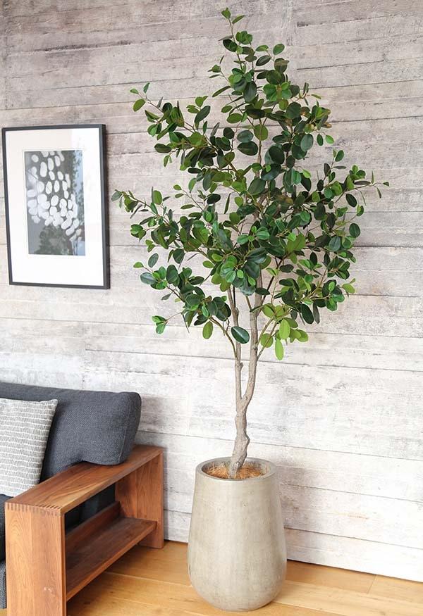 フェイクグリーン フランスゴムの木