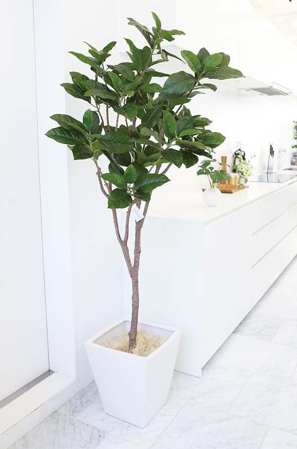 ピンポンの木