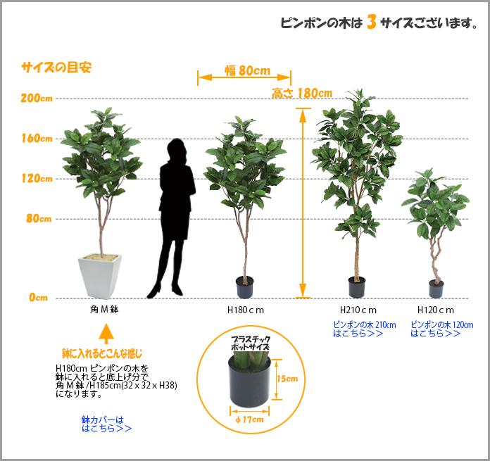 ピンポンの木サイズ