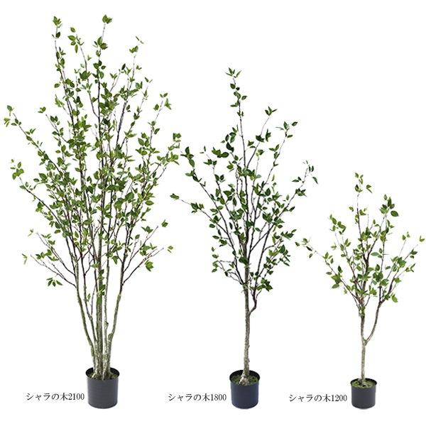 人工観葉植物シャラの木1200 1750 2100