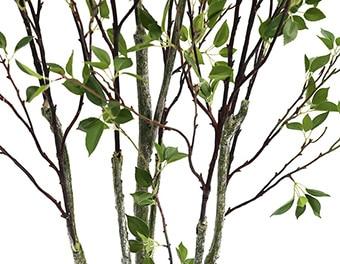 人工観葉植物シャラの木根本