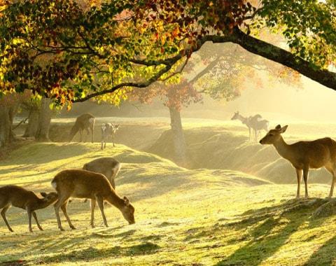 愛する自然のために、できること