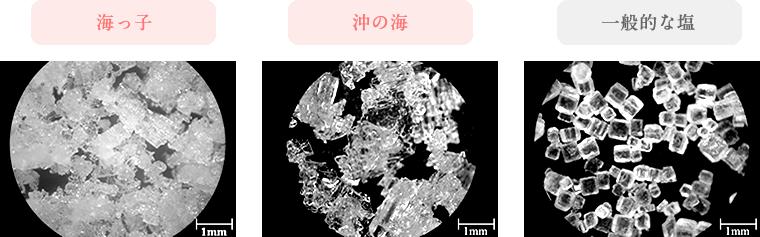 海っ子 沖の海 一般的な塩