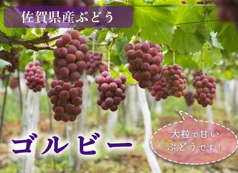 佐賀県産ぶどうゴルビー