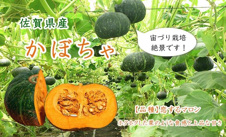 佐賀県産かぼちゃ