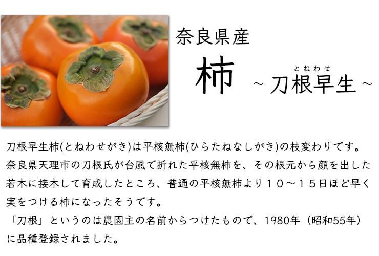 奈良県産刀根早生柿