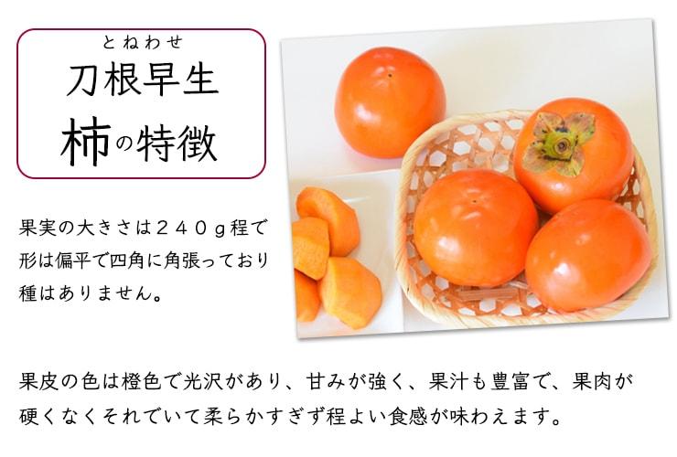 とねわせ柿の特徴