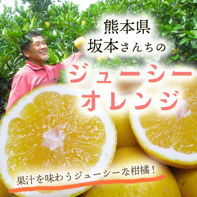 熊本県産坂本さんのジューシーオレンジ