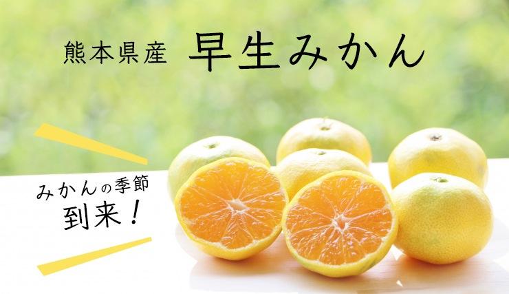 熊本県産早生みかん(温州みかん)