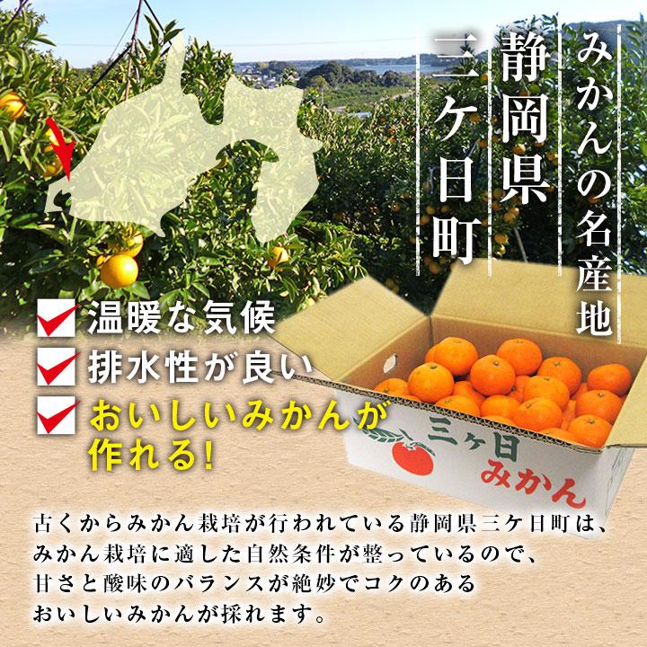 みかんの名産地静岡県三ヶ日町