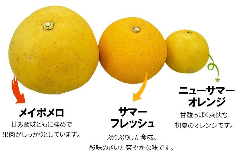 オレンジセット(5月お届け分)