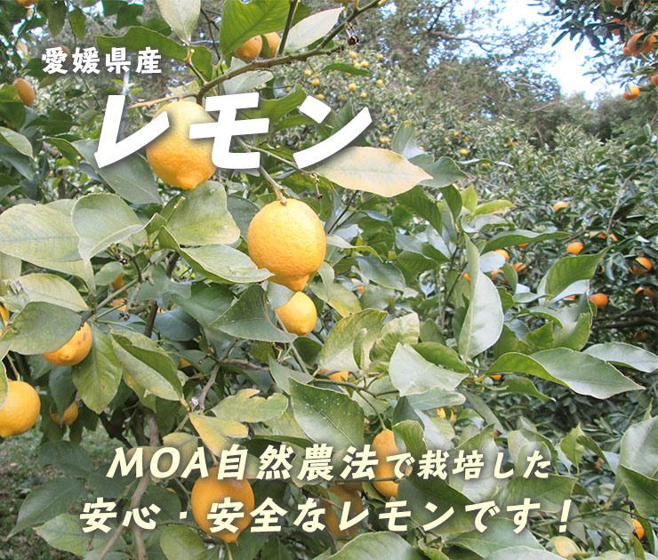 愛媛県産レモン