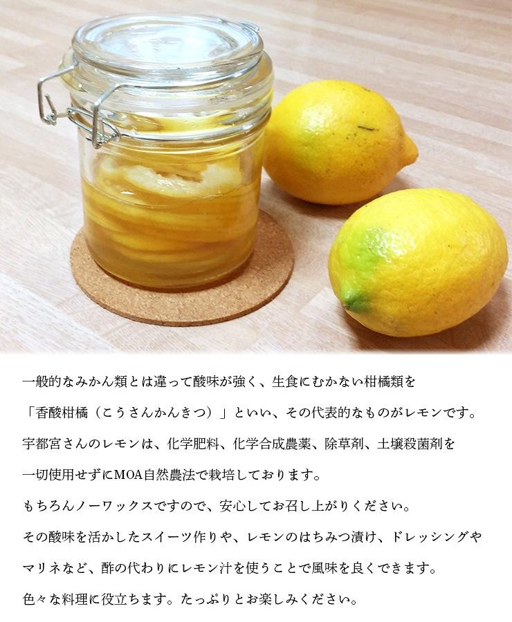 レモンん特徴