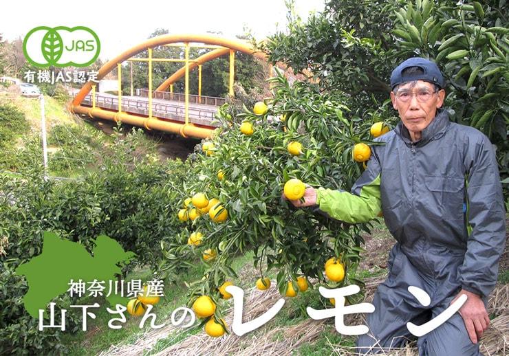 神奈川県産レモン