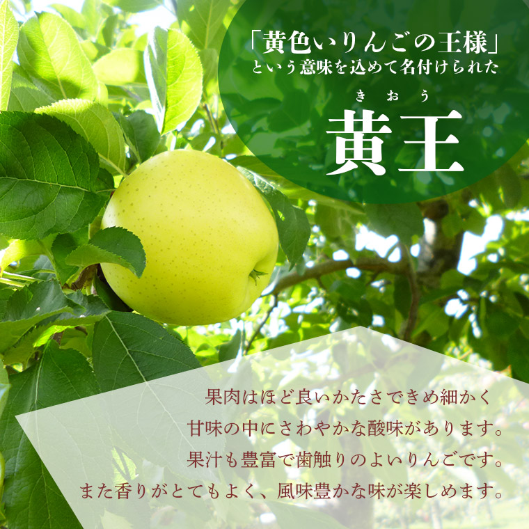 青森県産りんご黄王