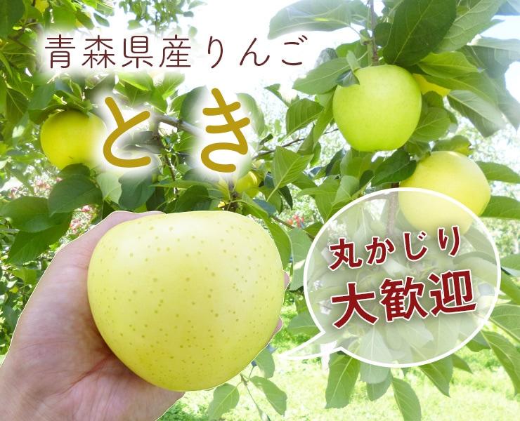 青森県産黄りんご「とき」