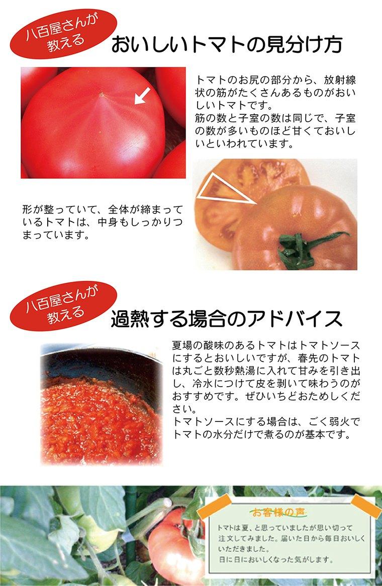 トマトの見分け方と加熱のポイント